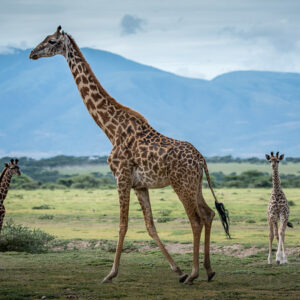 Attractions in Lake Manyara National Park
