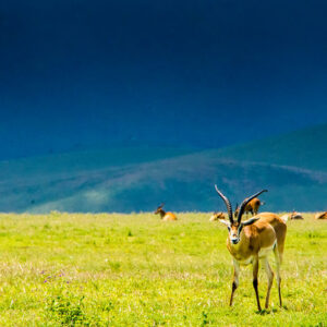 When to Visit Lake Manyara National Park